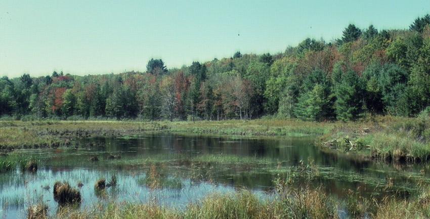 Beaver bog on Turner Hill, 1985